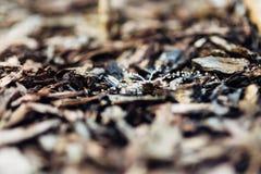 Bewässerungssystem für Bäume stockbilder