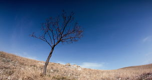 Bewölken Sie Fliege über dem zitternden Baum und gelbes Gras stock video footage