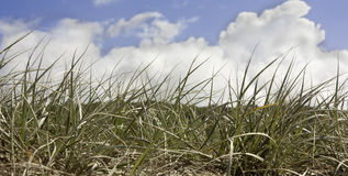 Bewölken Sie sich in einem blauen Himmel über Sanddünen am Strand Lizenzfreies Stockfoto