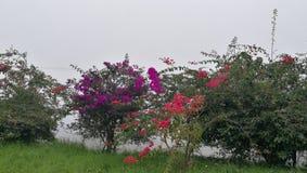 Bewölkte Blumen Lizenzfreie Stockfotografie