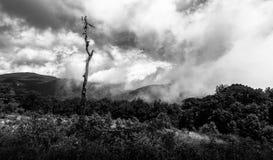 Bewölkte Gebirgsspitze mit einzelnem totem Baum in der Sommerlandschaft. Stockfotografie