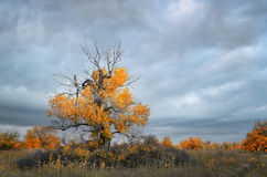 Bewölkte Herbst-Landschaft Stockfoto