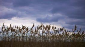 Bewölkte Himmel über dem Sumpf Lizenzfreie Stockbilder
