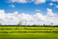Bewölkte Landschaft der Wolke des blauen Himmels des grünen Grases des Reisfeldes Stockfotos