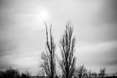 Bewölkte Landschaftsbäume stockfotografie