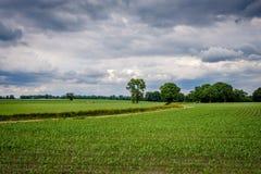 Bewölkte niederländische Sommerlandschaft im Juni nahe Delden Twente, Overijssel Stockfotos