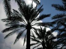 Bewölkte Palmen Stockfoto