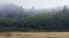 Bewölkte Waldlandschaft Stockfoto