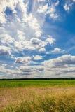 Bewölkter blauer Himmel über dem Feld mit Mais Lizenzfreie Stockfotografie