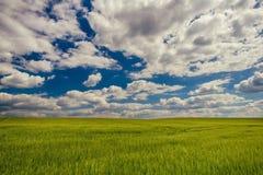 Bewölkter blauer Himmel über grünem Kornfeld Stockfotos