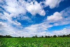 Bewölkter blauer Himmel mit grünem Feld Stockfotos