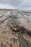 Bewölkter Herbsttag in dem Ozean Lizenzfreies Stockfoto