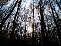 Bewölkter Herbstwald Stockfotos