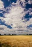 Bewölkter Himmel über dem Feld mit geerntetem Korn Stockbild