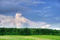 Bewölkter Himmel über dem Wald Lizenzfreies Stockfoto