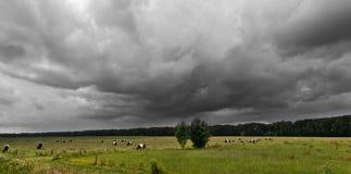 Bewölkter Himmel über dem Weiden lassen der Kühe Stockbilder