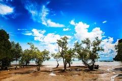 Bewölkter Himmel über den grünen Bäumen stockfotos