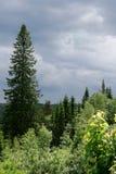 Bewölkter Himmel über einem Wald Stockfoto
