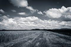 Bewölkter Himmel über Feld des Kornes und des Mais Lizenzfreie Stockfotos