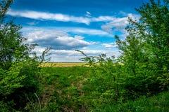 Bewölkter Himmel am Ende eines Waldes Stockfoto