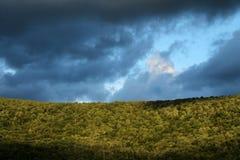 Bewölkter Himmel im Wald lizenzfreie stockfotografie