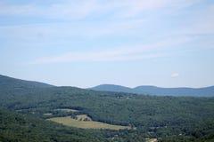 Bewölkter Himmel im Wald lizenzfreie stockfotos