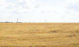 Bewölkter Hintergrund des blauen Himmels des Weizenfeldes Stockfotografie
