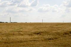 Bewölkter Hintergrund des blauen Himmels des Weizenfeldes Stockfotos