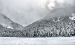 Bewölkter Schnee deckte Gebirgsbäume ab Stockbilder
