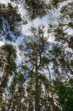 Bewölkter Sommerhimmel durch die Bäume Stockbilder