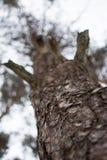 Bewölkung des Baums im Winterwaldmakrofoto Stockbild