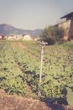 Bew?sserungsbetriebssystem auf einem Feld, Landwirtschaft lizenzfreie stockfotos