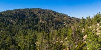Bewaldete Bergspitzen in Süd-Kalifornien Stockbild