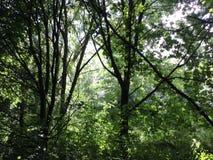 Bewaldete geheime Schlucht Stockfotografie
