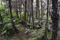 Bewaldete Spur Stockfotografie