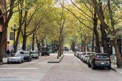 Bewaldete Straße in im Stadtzentrum gelegenem Seattle, Washington, USA stockfotos