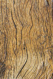 Bewaldeter abstrakter Hintergrund lizenzfreies stockfoto