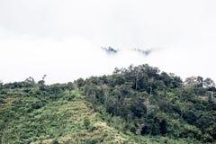 Bewaldeter Berghang in der tief liegend Wolke mit dem Immergrün Co Stockfoto