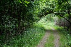 Bewaldeter Weg mit üppigem Laub Stockbild