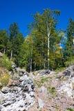 Bewaldetes Gipfel lizenzfreie stockfotos