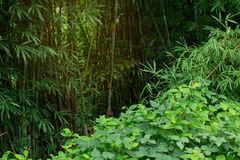 Beware οι κρυμμένοι κίνδυνοι και η υποδοχή στη ζούγκλα Tha πραγμάτων στοκ φωτογραφία με δικαίωμα ελεύθερης χρήσης