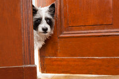 beware собака Стоковая Фотография RF