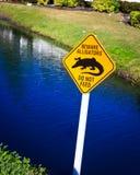 Beware Alligator Royalty Free Stock Photo