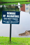 Beware of alligators sign with alligator in lake Royalty Free Stock Image