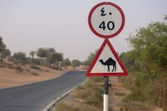 Beware of Came; crossing sign in a desert road or street in the United Arab Emirates stock photography