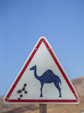 Beware camels Royalty Free Stock Images
