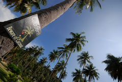 Beware of Coconut sign. Sign in palm tree grove warning of danger of falling coconuts Royalty Free Stock Photography
