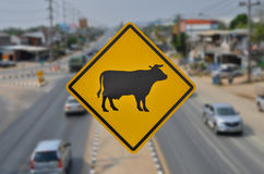 Beware cow herd across the road sign. On busy traffic background Royalty Free Stock Photos