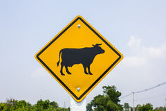 Beware of cow Stock Image