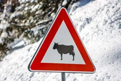 Beware of the cows sign, Cortina D`Ampezzo, Italy stock images